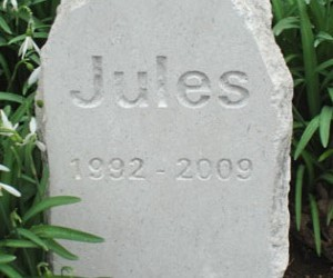 Jules-315x250