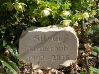Pet memorial garden boulder sand stone