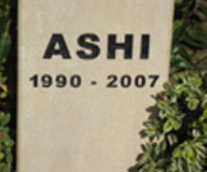 ashistone-315x250