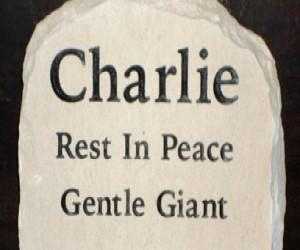 charlie2-408x250