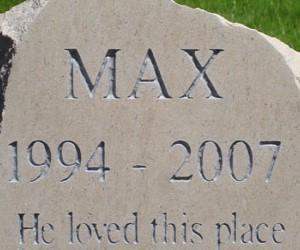 max-408x250