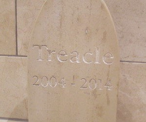 pet-headstone-treacle-482x250