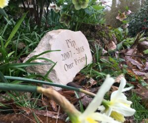 pet memorial boulder for pip in sandstone standing in the garden