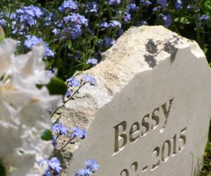 limestone pet memorial with unpainted letters for bessie standing amongst forget me not flowers
