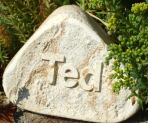 rainbow cobble with letters in relief for ted amongst the sedum