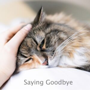 Person stroking the head of a cat to say goodbye. Click on this link and see how pet memorials can help