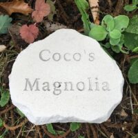 Limestone Cloud Plaque Pet Memorial for Coco placed near the Magnolia where she used to Sleep